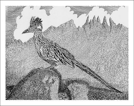 New-Mexico-Roadrunner-Drawing